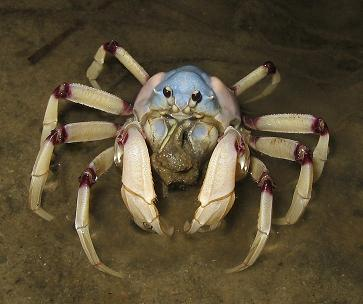 even our crustaceans are prettier.JPG