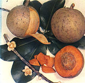 Mammea Americana: Mangosteen's Long Lost South American Cousin